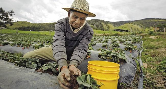 Invierten canon minero en proyecto productivo a favor de 3 mil campesinos